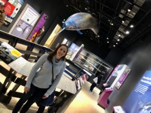 Narwhal Exhibit - Smithsonian